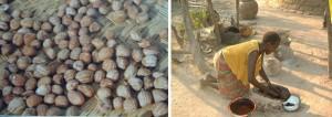 extraccion-del-karite