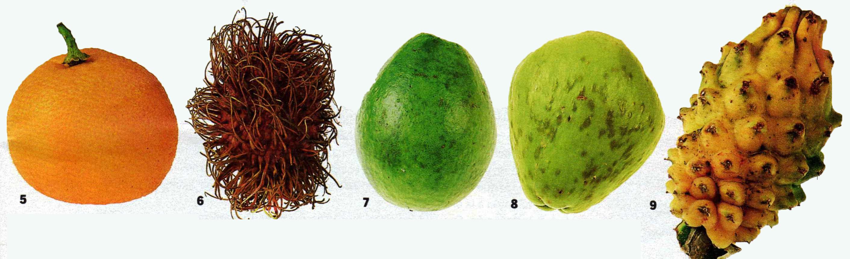 Hortalizas y frutas ex ticas sabor de familia - Frutas tropicales y exoticas ...